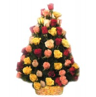 50 Mix Color Roses