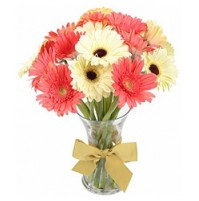 10 stems of Pink and White Gerberas IN VASE