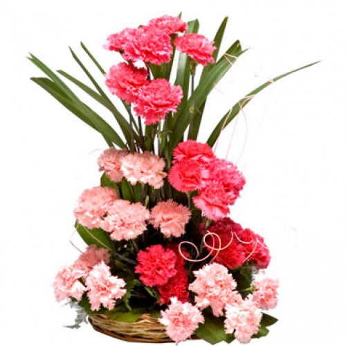 Red & Pink Carnation Combo