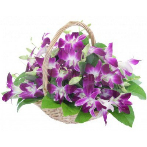 Purple Orchids in Basket