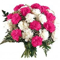 PINK AND WHITE CARNATIONS HAND BUNCH