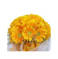 Yellow Gerberas